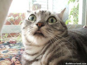 A cat's reaction to obstructive sleep apnea