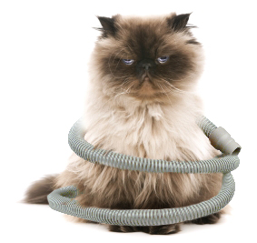 Cat with cpap hose